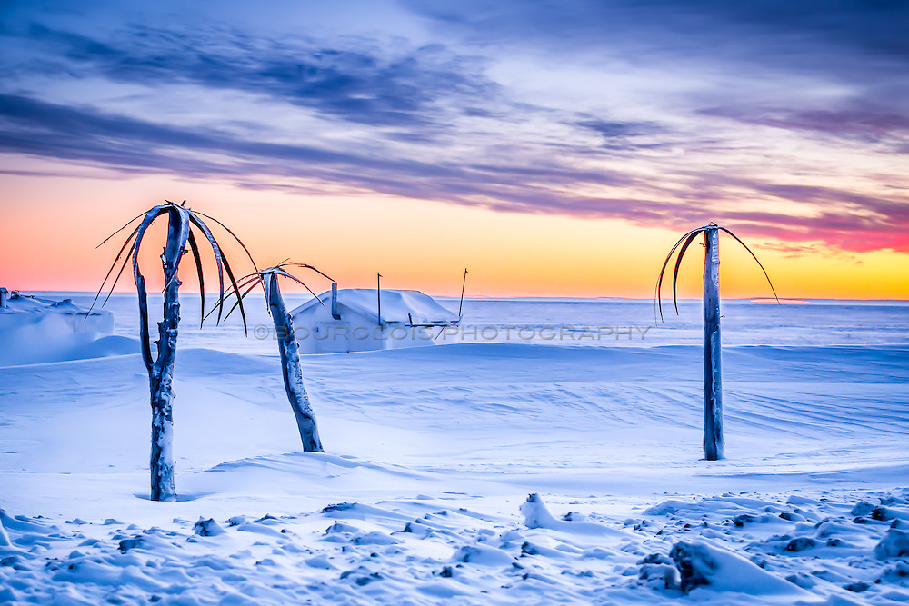 Whale baleen made and petrified wood into palm trees at the top of the world. Barrow Alaska now known as Utqiagvik.