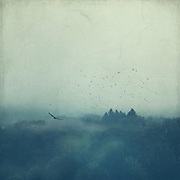 Misty forest landscape with birds