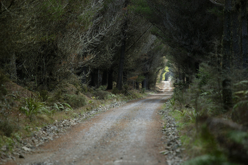 A forestry track through pine trees forms part of the roading network in the giant Kaingaroa Forest in the Central Plateau between Rotorua and Taupo, New Zealand, October 18, 2004. Credit:SNPA / Rob Tucker