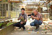captive] Kea (Nestor notabilis) with Kea researcher Dr. sc. nat. Gyula K. Gajdon (left). Keas are kept in an outdoor aviary (250 m2) at the Kea Lab of the Messerli Research Institute. Researchers can cut off certain areas of the aviary in a way that they are only accessible for single animals. The picture was taken in cooperation with the University of Vienna (UniVie) and University of Veterinary Medicine Vienna (VetMed). | Kea oder Bergpapagei (Nestor notabilis) mit Kea-Forscher Dr. sc. nat. Gyula K. Gajdon (links). Im Kea Lab des Messerli Forschungsinstituts werden die Tiere in einer 520 m2 großen Außenvoliere gehalten. Forscher können für die Versuche bestimmte Bereiche abtrennen und nur für einzelne Tiere zugänglich machen. Das Bild wurde in Zusammenarbeit mit der Veterinärmedizinischen Universität Wien und der Universität Wien erstellt.