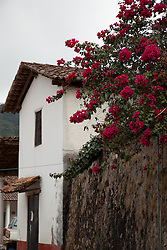 """Flowers in San Sebastian"" - These flowers and old wall were photographed in the small mountain town of San Sebastian, Mexico."