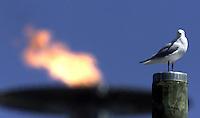 Meeuw heeft mooi plekje in het Olymopisch Park gevonden. Op de achtergrond het Olympisch vuur.