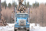 Photo Randy Vanderveen.south of Grande Prairie.A truck is loaded with short logs from mountain pine beetle infected trees. South Peace Municipalities Pine Beetle program sends some of its logs to the local Weyerhaeuser and Canfor plants.