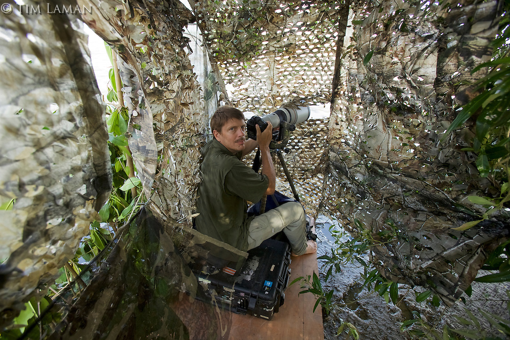 Photographer Tim Laman shooting from a blind in the Orinoco River Delta, Venezuela.