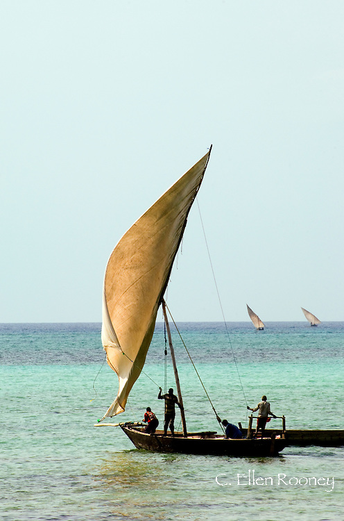 Fishing dhows setting sail in the afternoon from Nungwi, Zanzibar, Tanzania