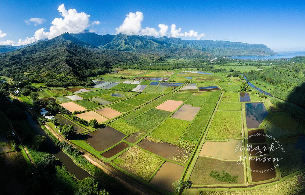 Taro Fields, Hanalei Valley, Kauai, Hawaii, USA