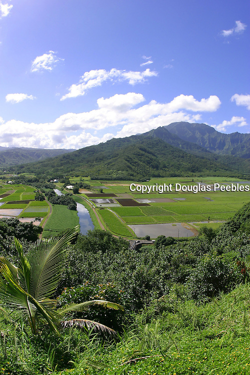 Hanalei Taro Fields, Hanalei, Kauai, Hawaii<br />