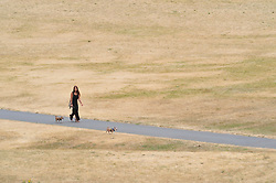 © Licensed to London News Pictures. 20/07/2018<br /> Greenwich, UK. Burnt dry grass on Greenwich Park in London, caused by a prolonged heatwave and dry period across the south of England. Photo credit: Grant Falvey/LNP