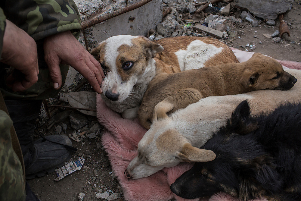 PERVOMAISKE, UKRAINE - MARCH 19, 2015: A fighter who uses the name Uncle Vova, a member of the pro-Ukrainian Dnipro-1 battalion, pets a dog named Camouflage at one of the group's bases known as The Bridge near ongoing battles for the town of Pisky in Pervomaiske, Ukraine. CREDIT: Brendan Hoffman for The New York Times