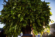 A farmer carries a bundle of Khat from his farm to be sold to Somali Khat buyers who then ship the drug to Somalia, and the UK.