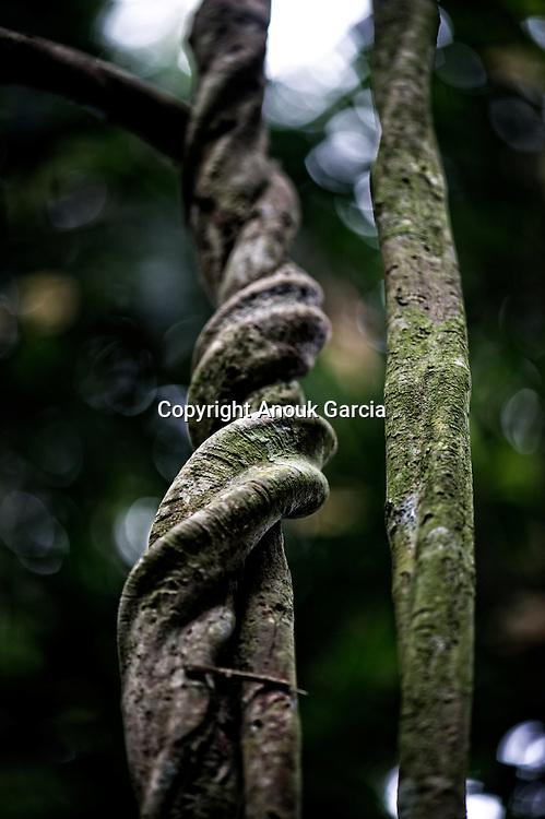 Seringal Cahoeira immersion dans la forêt primaire et enseignement du seringuerions Nilson Mendes, cousin de chico mendes