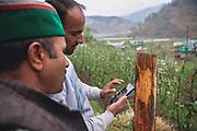 People looking at their mobile phones for crop related news in Dalgaon village in Spail Valley of Rohru, Shimla, Himachal Pradesh, India