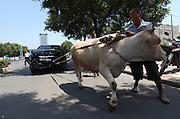LUOYANG, CHINA - JULY 31: (CHINA OUT) <br /> <br /> Car Owner Protests With Bull<br /> <br /> A bull drags a JAC (Jianghuai Automobile Co., Ltd) S5 in the street on July 31, 2013 in Luoyang, Henan Province of China. Liang Lijun hired the bull to stage a protest. He bought the car for 100,000 yuan (16,300 USD) on July 9 this year. The salesman told Liang that he couldn't get the commercial insurance at once, as they didn't have any invoice and certificate in that moment. But Liang still drove his new car home. He had a car accident next day morning. <br /> ©Exclusivepix