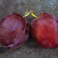 Two dark red plums or Prunus domestica Marjories seedling joined by their stalks lying on tarnished metal plate