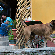 Antonio Cruz Sanchez, 26, sits outside the SERES Office while his dog, Jango, keeps watch over the communal living space, the SERES Embassy. San Juan Del Obispo, Guatemala, July 23, 2014