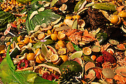 According to Jessica Thompson of the Compost Cats, about 1,000,000 pounds of food and compostable materials from restaurants and food vendors has been deposited in a compost pile by the group of University of Arizona students in Tucson, Arizona, USA.