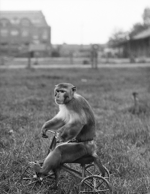 Circus at Maidstone with Monkey on Bicycle, Kent, England, 1932