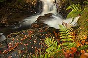 Ferns, autumn leaves and stream near Rob Roy MacGregor's grave, Balquhidder, Scotland