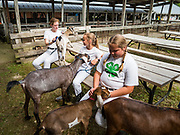 27 JUNE 2019 - CENTRAL CITY, IOWA: Participants in the Dairy Goat contest wait to enter the show ring at the Linn County Fair. Summer is county fair season in Iowa. Most of Iowa's 99 counties host their county fairs before the Iowa State Fair, August 8-18 this year. The Linn County Fair runs June 26 - 30. The first county fair in Linn County was in 1855. The fair provides opportunities for 4-H members, FFA members and the youth of Linn County to showcase their accomplishments and talents and provide activities, entertainment and learning opportunities to the diverse citizens of Linn County and guests.      PHOTO BY JACK KURTZ