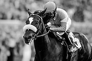Zenyatta with Mike Smith up wins the Clement L Hirsch Stakes at Del Mar, Del Mar Calif. August 7, 2010<br /> <br /> Please Credit Alex Evers/ Equisport Photos