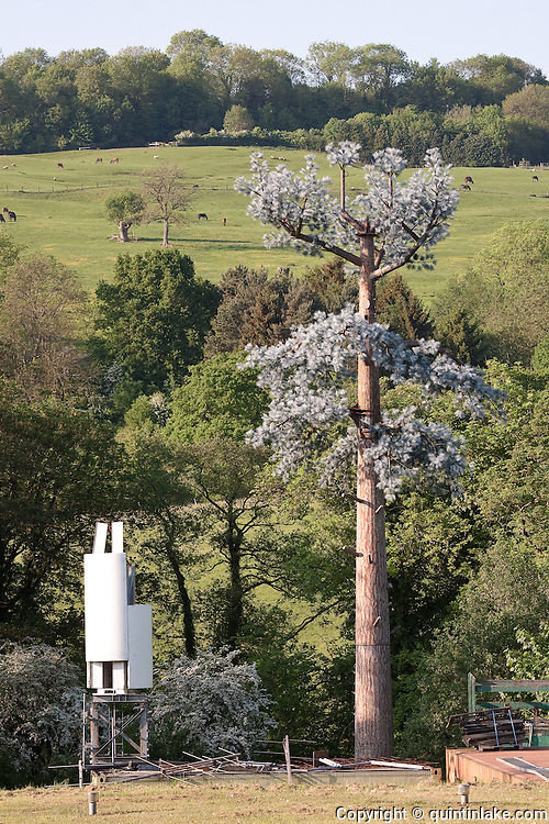 """False Tree Mobile Phone Mast / Fake Cell phone Antenna Tower and white transmitter in English landscape..Disguised """"Antenna Tower in the form of a Tree""""  at the Offices of AlanDick  located next to the A40 at Charlton Kings. Cheltenham, Gloucestershire, England"""