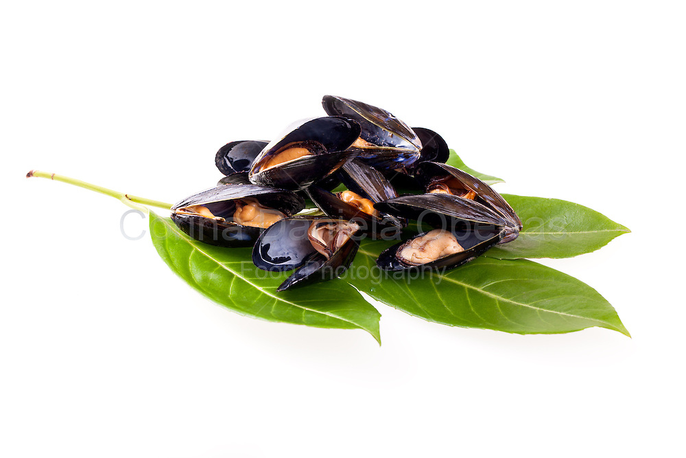 Stewed mussels on privet leaves isolated on white background.