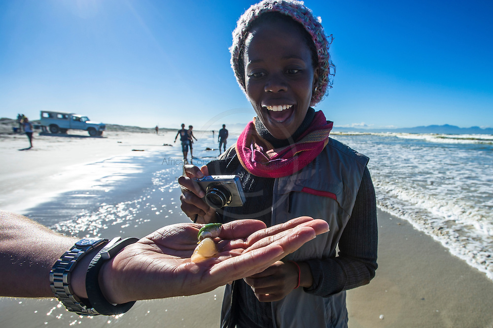 Joy of discovery of a Ploughshare Snail, Strandfontein, False Bay, Western Cape, South Africa