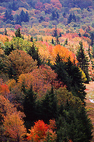 Fall colors explode on the trees at  Canaan Valley State Park. The park located in the Allegheny Mountains of Tucker County, West Virginia, offers scenic beauty and plenty of outdoor recreation including hiking, biking, and cross country skiing..