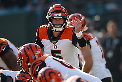 OAKLAND, CA - NOVEMBER 17: Quarterback Ryan Finley #5 of the Cincinnati Bengals signals from behind the line of scrimmage during the second quarter against the Oakland Raiders at RingCentral Coliseum on November 17, 2019 in Oakland, California. The Oakland Raiders defeated the Cincinnati Bengals 17-10. (Photo by Jason O. Watson/Getty Images) *** Local Caption *** Ryan Finley