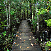 The Swamp Walk is a primitive boardwalk extending 1000 feet into the beautiful cypress swamp of Joyce Wildlife Management Area. The Joyce Swamp is one of the largest uninhabited swaps in Louisiana. Photo by Lori Waselchuk