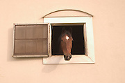 Horse looking out window of barn at Berkshire Coaching Weekend October 2004