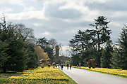 © Licensed to London News Pictures. 17/03/2014. Kew, UK People walk through the daffodils with cloudy skies forming above. People enjoy the occasional sunshine at Kew Gardens today 17th March 2014. Photo credit : Stephen Simpson/LNP