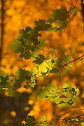 Green foliage in a fall setting.