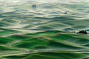 Eastern Washington has the best farmland around. You can get lost in the 'waves' of green that surround you as you drive around the area.