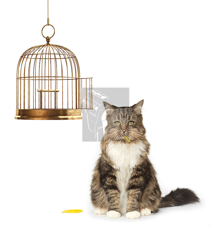 Cat with a full mouth sitting next to an empty bird cage