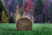Hay bale in farm field, Bristol, Vermont, USA.