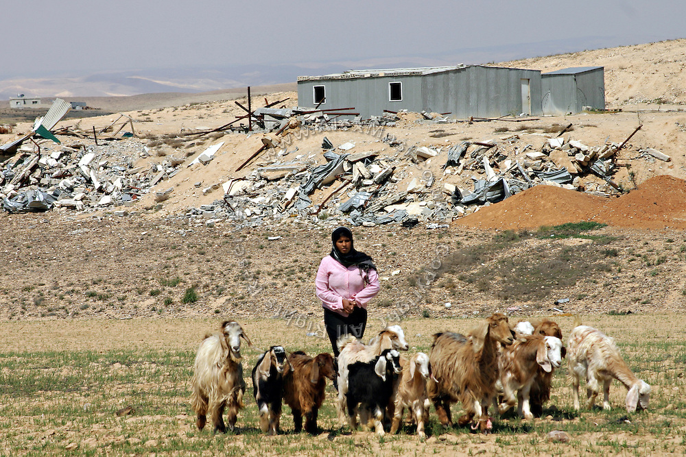 Bedouin woman with her herd in the unrecognised Bedouin village of Um Matnan, close to Beer Sheva, the capital of the Negev, a large deserted area in the south of Israel. Their house has been demolished together with other four, a month before the picture was taken. The five families now live where they used to keep their camels. Numbering around 200.000 in Israel, the Bedouins constitute the native ethnic group of these areas, they farm, grow wheat, olives and live in complete self sufficiency. Many of them were in these lands long before the Israeli State was created and their traditional lifestyle is now threatened by subtle Governmental policies. The seven Bedouin towns already built are all between the 10 more impoverished towns in Israel..