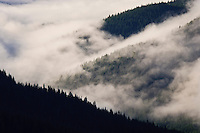 Morning fog burns off in the Mineral Creek valley of the Tahoma State Forest - Noble Fir and Pacific Silver Fir conifers blanket the mountainsides in verdant growth in the Cascade Mountain Range of Washington state, USA.