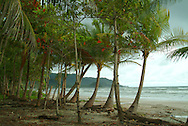 sandy beach in cost rica