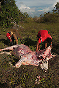 Slaughtering Cow<br /> Kwaimata Village<br /> Rupununi<br /> GUYANA<br /> South America