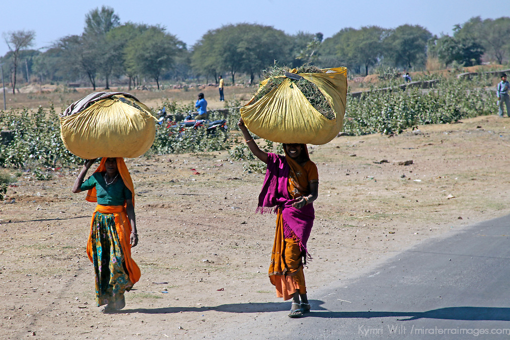 Asia, India, Rajasthan. Women carrying loads on heads in Rajasthan.