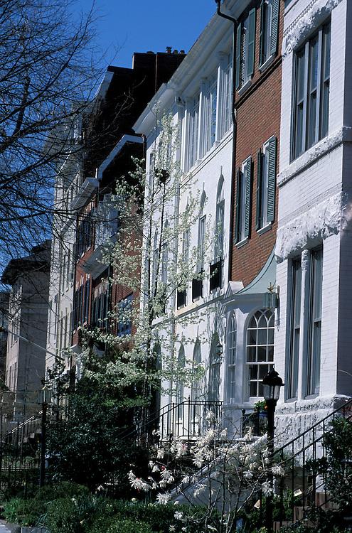 Spring blooming trees, Georgetown, Washington D.C. , USA