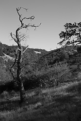 Black and White Scenes from Figueroa Mountain Road
