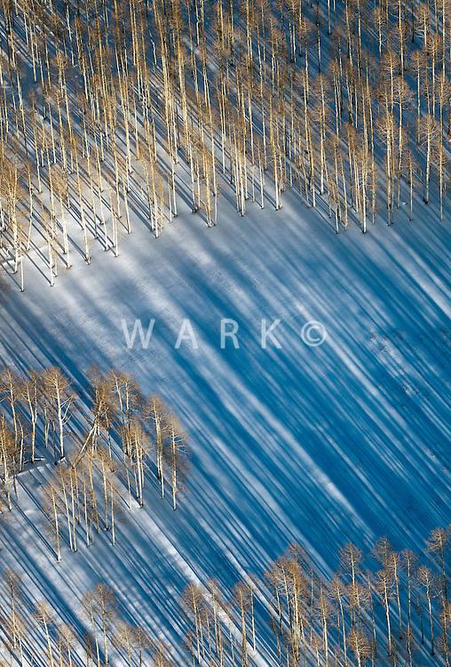 Trees, snow and shadows. Manti-La Sal, Utah