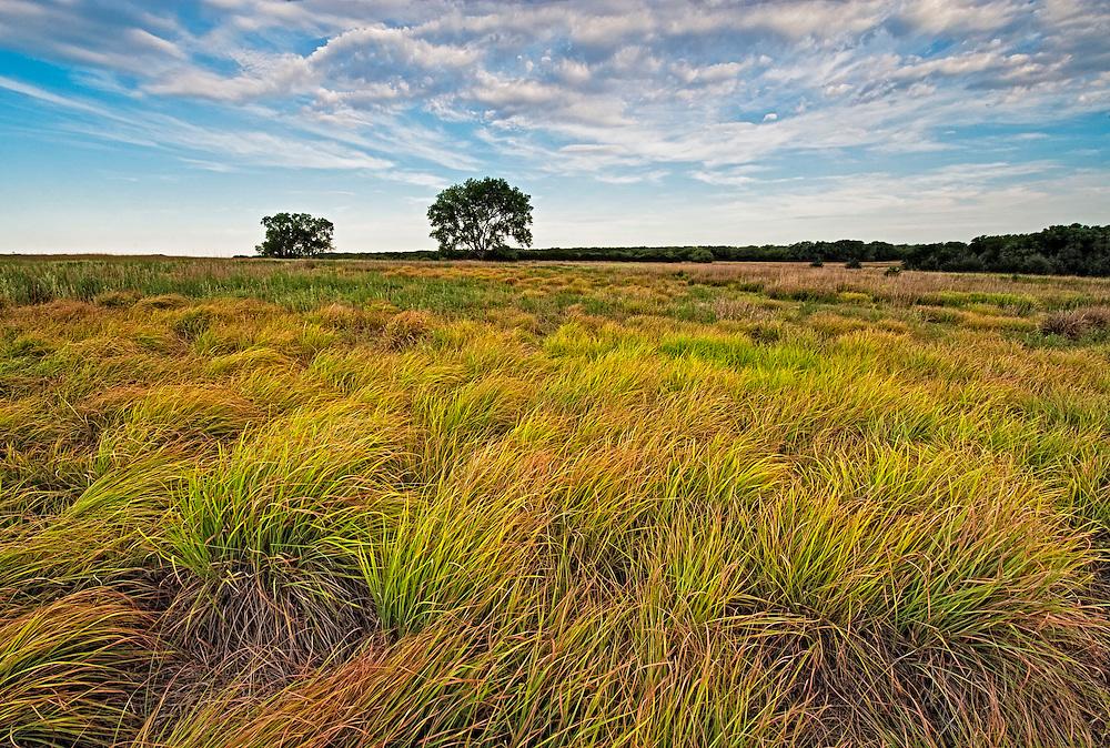 Prairie Grass at the Cedar Bluff Wildlife Area,Kansas