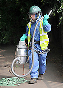 © licensed to London News Pictures. BRENTFORD. LONDON, UK. 29/07/11.Special masks and breathing equipment are needed to protect the workers from the dangerous hairs which can be breathed in. Staff at British Waterways 'vacuuming' oak trees to eradicate the dangerous alien Oak Processionary Moth. British Waterways is working to halt the spread of the invasive non-native moth along the leafy Grand Union Canal at Brentford. The moths are hazardous to human health and strip English oak trees of foliage which can ultimately cause the trees to die. As pesticides are not allowed to be used near water, the moths were 'sucked' out of the trees. The Oak Processionary Moth (OMP) is native to southern and central Europe and is a major defoliator of Oak and a constant problem to native oaks. Populations of the moth vary year to year and are regularly monitored. The Moth (OMP) gets its' name from the characteristic way the larvae mass on trunks and branches and move in a nose to tail procession. The caterpillars have irritating hairs that carry a dangerous toxin. The hairs are easily blown in the wind causing serious irritation to the skin, eyes and bronchial tubes of both humans and animals. The moth poses a significant human health risk when populations reach outbreak proportions. As a result populations across Europe are constantly monitored and alert systems are in place. It is imperative that larvae caterpillars are not handled. Adults emerge mid July to Mid September. Mandatory Credit Stephen Simpson/LNP