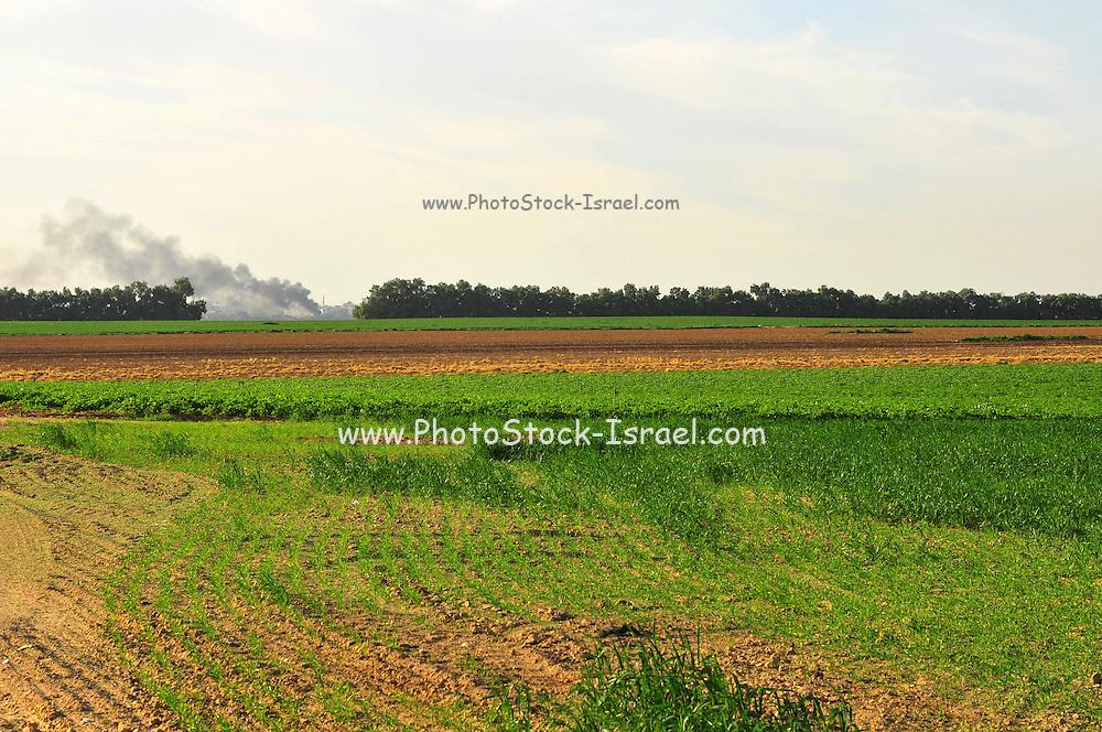 Israel, Northern Negev Desert, Wheat Field