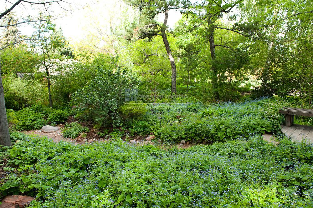 Woodland Mosaic Garden, May