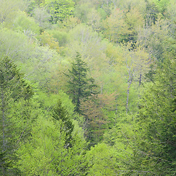 Spring in the forest of Franconia Notch State Park in New Hampshire's White Mountains.