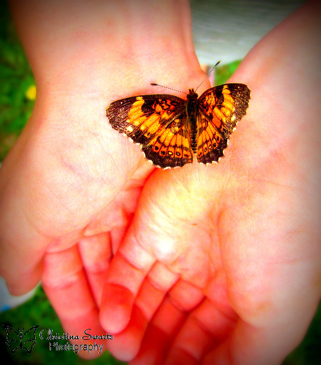Holding Butterfly image for sale